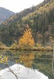黄色树在水反射 免版税图库摄影