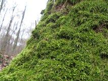 绿色树干 免版税库存图片
