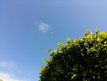 绿色树留下月亮蓝天 库存照片