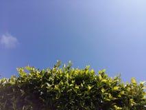 绿色树留下蓝天 免版税图库摄影