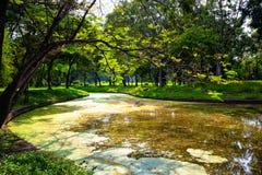 绿色树看法在公园 免版税库存图片