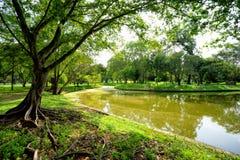 绿色树看法在公园 免版税库存照片