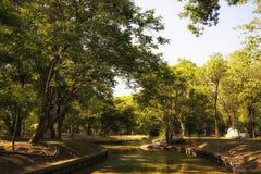 绿色树看法在城市公园,在晴朗的夏日 库存照片