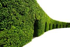 绿色树篱弯曲的墙壁  库存照片