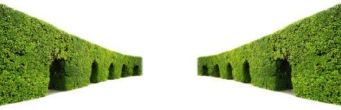 绿色树篱弯曲的墙壁  免版税库存图片