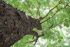 绿色树自然亚洲流行艺术 免版税库存照片