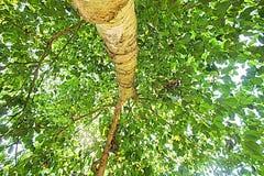 绿色树自然亚洲流行艺术 库存照片