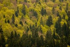 绿色树荫在森林风景的 库存图片