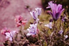 紫色树荫 库存照片