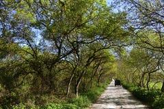 绿色树被排行的土道路 库存照片