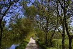 绿色树被排行的土道路 库存图片