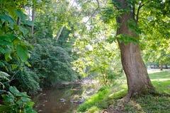 绿色树被排行的小河 免版税库存照片