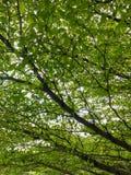 绿色树阳光背景 免版税库存图片