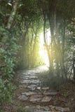 绿色树隧道  免版税库存照片