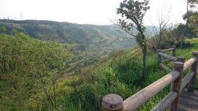 绿色树领域 免版税库存图片