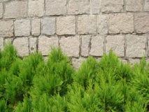 绿色树,是city& x27; s美好的风景 免版税库存照片
