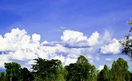 绿色树,白色云彩,蓝天,靛蓝靛蓝 库存照片