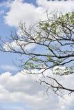 绿色树,蓝天背景 免版税库存图片