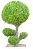 绿色树 库存照片