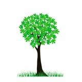 绿色树 库存图片