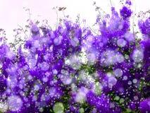 紫色桃红色阵雨在秋天开花绽放所有树 免版税库存照片