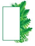 绿色框架传染媒介和例证01 免版税库存图片