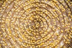 黄色桑蚕茧 免版税库存图片