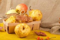 黄色梨和桃红色苹果 免版税库存照片