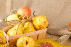 黄色梨和桃红色苹果 免版税库存图片