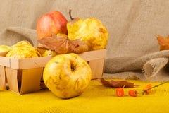 黄色梨和桃红色苹果 库存图片