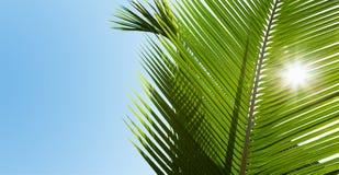绿色棕榈叶在阳光下 免版税图库摄影