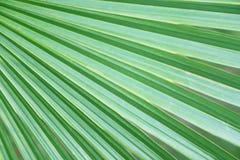 绿色棕榈叶样式,在棕榈叶的特写镜头 库存照片