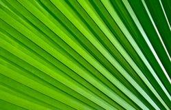 绿色棕榈叶样式 免版税库存照片