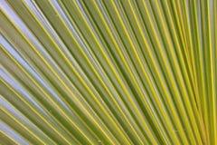 绿色棕榈叶 库存照片