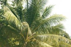 绿色棕榈树叶子用椰子 夏天旅行葡萄酒定了调子照片 库存照片