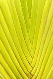 绿色棕榈树叶子背景 库存图片