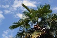 绿色棕榈树无危险天空 免版税库存图片