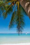 绿色棕榈树用在白色沙子海滩的椰子 免版税库存照片