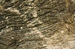 绿色棕色石纹理背景 免版税库存照片