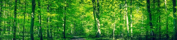 绿色森林全景在春天 库存照片