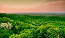 绿色森林全景 免版税图库摄影