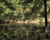 绿色森林和它的反射在水中:在夏天ne的风景 免版税库存照片