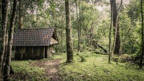绿色森林和小屋在一个有薄雾的早晨,马来西亚。 库存图片
