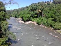 绿色森林和河 免版税库存图片