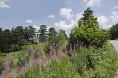 绿色森林和花田在Rila 免版税库存图片
