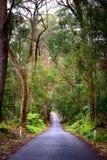 绿色森林在澳大利亚 免版税库存照片