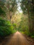 绿色森林在澳大利亚 免版税库存图片