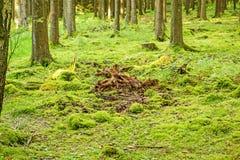 绿色森林地板 库存照片