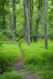 绿色森林地道路 免版税库存图片