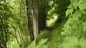 绿色森林地 免版税库存照片